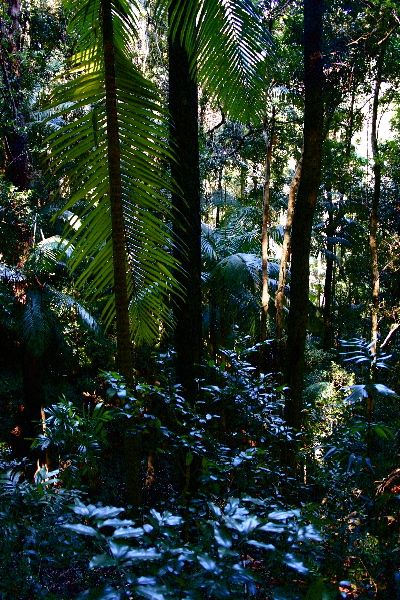 leaves in the rainforest